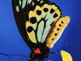 Gato Barbieri - Butterfly