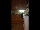Декстер прячь уши