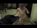 Собачки ухаживают и играют с малышами )