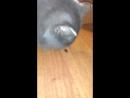Мой кот - идиот