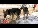 Красивые щенки погибали в теплотрассе но женщина не смогла пройти мимо