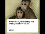 Китайские ученые впервые клонировали обезьян