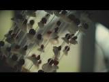 ? Чем необыкновенней что-либо, тем проще оно с виду...#ветер#звук#музыка#ракушки#новосибирск