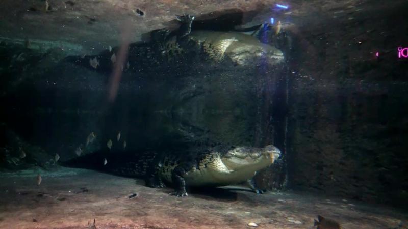 ооочень большой крокодил