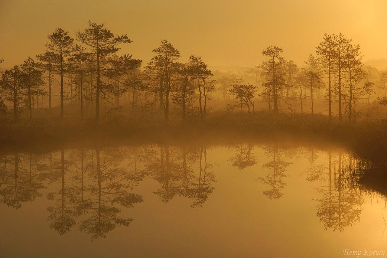 Туманные отражения