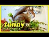 ???  SQUiRREL ALEXANDRA & CATs - help, we have bacteria • RUSSIA | Katzen | Eichhörnchen | белка  ???