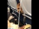 И почему в наших самолётах нельзя летать с собаками По моему такой полет гораздо веселее 😄 Repost @ lil rufio with @ get repos