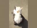 «А теперь покатай меня... Большая Черепаха» из мультфильма «Львенок и черепаха»  Kitten rides on turtle