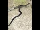 В Сочи участились случаи появления змей в людных местах, будьте аккуратнее.