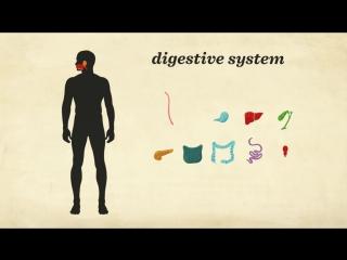 Как устроена наша пищеварительная система ¦ Перевод DeeAFilm Studio