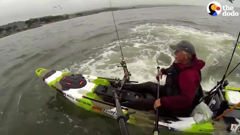 Whales Surprise Guy on Kayak