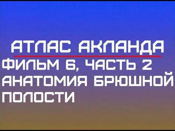 Анатомия брюшной полости Фильм 6, часть 2 Видеоатлас Акланд Русский перевод