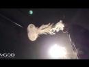 ТРЮКИ С КАЛЬЯНОМ ДЫМОМ КАЛЬЯН ЛУЧШЕЕ торнадо, медуза под музыку BEST Smoke Tricks 2016 37