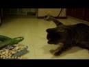 КОТЫ И ОГУРЦЫ Коты боятся огурцов