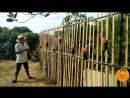 КИТАЙСКИЕ УЛОВКИ. Бамбуковые хитрости в честь Дня Рождения Бабушки ''НайНай ШэнЖи''. Новый забор ''Чжу ЛиБа''. Самодельная метла