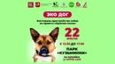 22 июля Москва парк Кузьминки Фестиваль пристройство собак из приюта