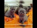 Все самые милые котики