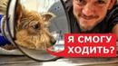 Собака потеряла лапу Но не потеряла любовь к жизни и людям Ветеринарное ранчо