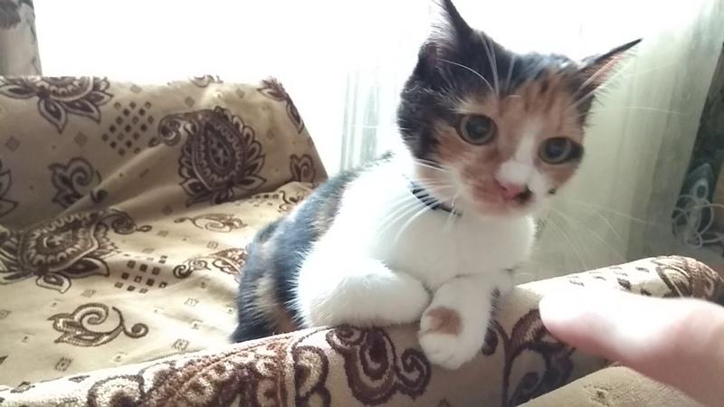 Кошка Мотька очень хочет грызть меня