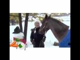 Снеговик накормил лошадь витамином А