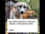 Как ЧМ по футболу в России связан с отстрелом собак