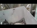 Толерантный кот: не совсем по теме видео,то есть мыши,но флегматизм кота не оставил меня равнодушной