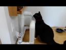 Поилка для Кота от изобретателя сантехника