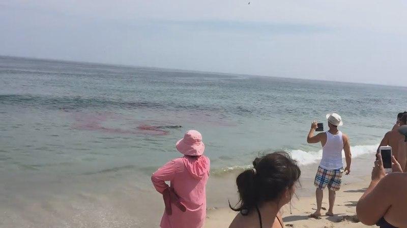 Шок!Нападение акулы на пляже,люди в панике жесть(новое видео)