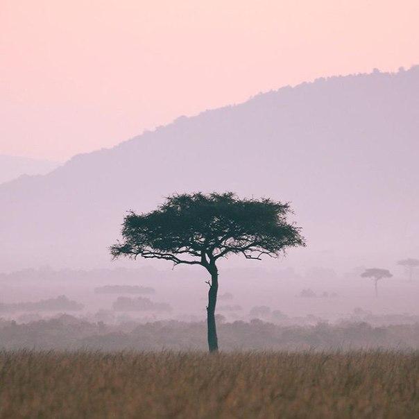 Для тех, кому хочется экзотики: авиабилеты в Кению (Найроби) за 30300 рублей туда-обратно из Москвы
