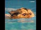 Котики спасаются от жары
