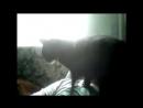 Любовь и ревность (кошки)