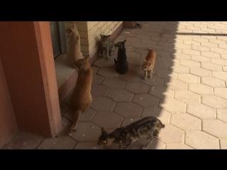 Кошки подпевают флейтам