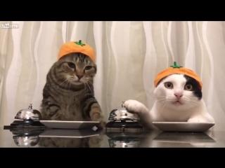 Коты просят еды