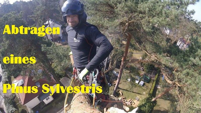 3D Rigging I Abtragen eines Pinus Sylvestris I Die Klettereinheit