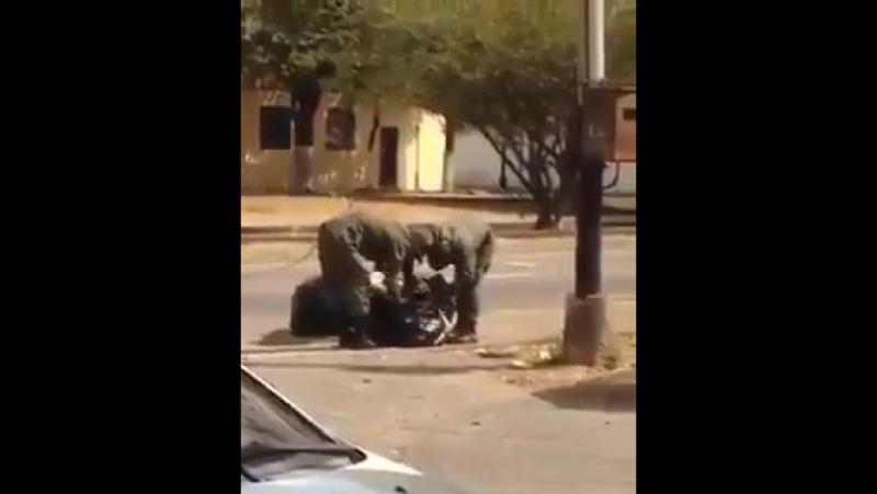 Linksfaschisten.co Selbst Soldaten fressen den Müll auf der