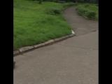 [OssVes] Ребята во Владикавказе сами починили скамейки на набережной