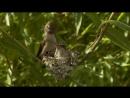 Hummingbird Feeding Chicks for 20 days