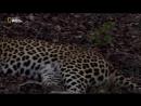 Кошачья душа HDTVRip 720p (2017)