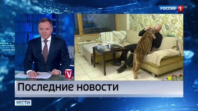 Вести-Москва • Проект закона, запрещающий содержать дома диких животных, внесен в Госдуму