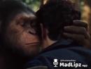 Король обезьян.