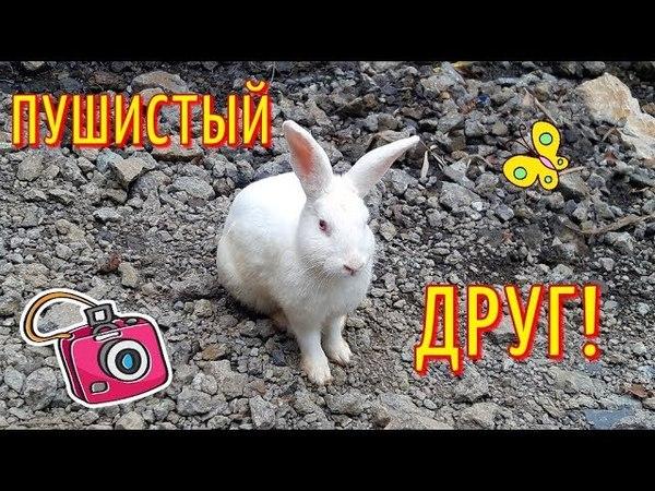 Кролик, который гуляет сам по себе в КОСТА РИКЕ / Забавный белый кролик КОСТА-РИКА