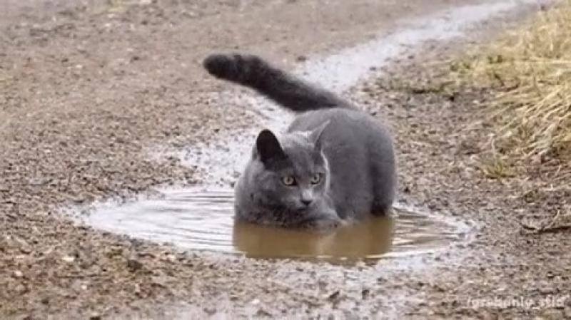 коты грязи не бояться