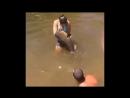 Девушка поймала гигантского сома голыми руками