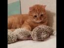 Кот и ёжики