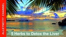 5 Herbs to Detox the Liver and Protect the Body From Toxins and Pollutants