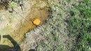 У Кузнецовську на березі річки Стир Рівненської області знайдено великий Бурштин