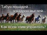 Табун лошадеи