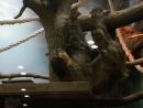 Ленивец кушает 5 апр