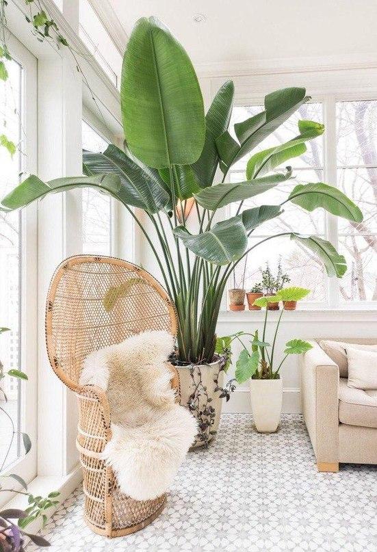 Тренд: крупная ботаника в интерьере