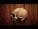 Анатомия внутреннего основания черепа (basis cranii interna)